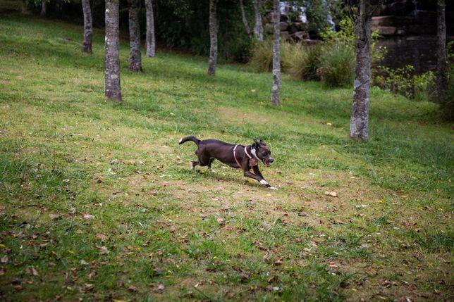 Pet sitting e dog walking