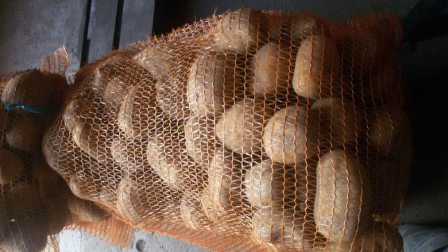 Ziemniaki odmiana Jelli- jadalny i w rozmiarze sadzeniaka