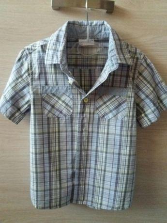 Koszula r 104 Coccodrillo