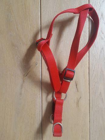 Czerwone szelki dla psa