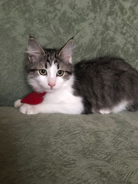 Котёнок бесплатно Днепр - изображение 1