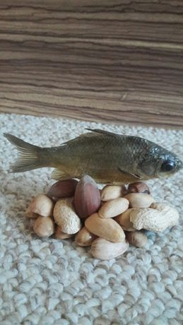 Риба риба риба риба