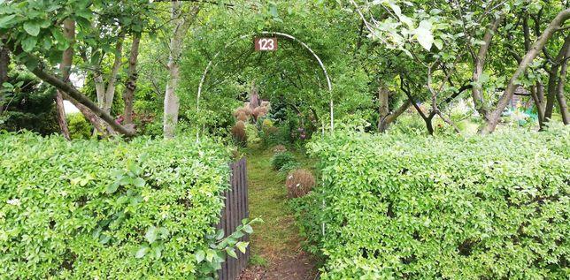 Ogródek działkowy ROD Wieczorka