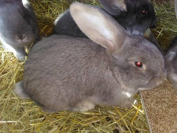 обменяю кроликов