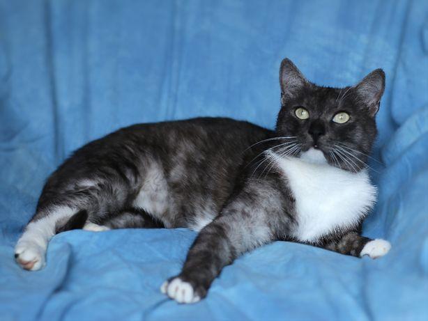 Очень прикольный кот 1 год кастрирован