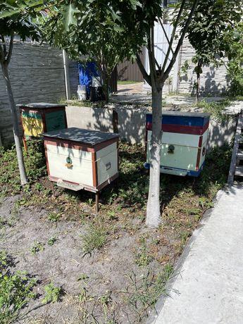 Продам вулики з бджолами