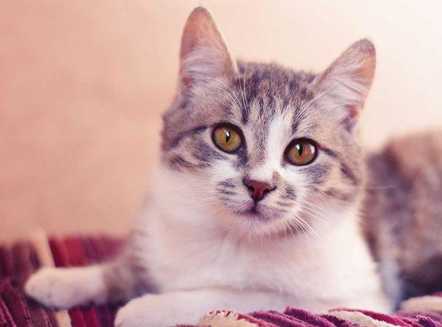 Кошечка Муся 6 мес (трехлапка) в поисках заботливой семьи!