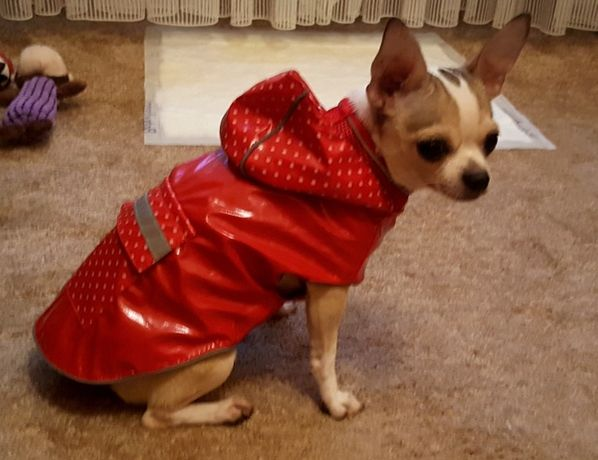 Sliczny przeciwdeszczowy płaszczyk dla psa 2 kolory czarny i rozowy