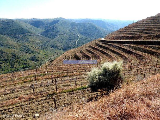 51ha olival, vinha, cortiça. Portugal, Guarda, Douro Superior.