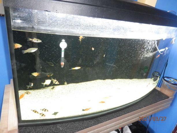 akwarium używane