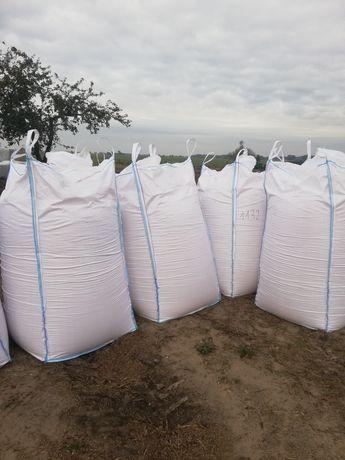 Kukurydza mielona kiszona ziarno CCM. Zbiór 2021