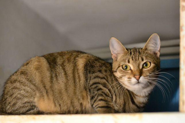 кішечка Манічка в пошуках домівки 8м