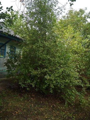 Продам дом в селе Дорошовка(Буша).