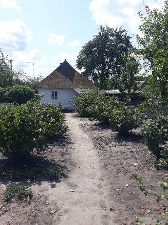 продам буданок в селі Шамраївка Сквирського району.