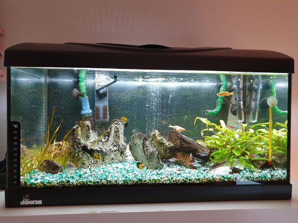 Markowe akwarium DIVERSA 60l z wyposażeniem, akcesoriami i rybami