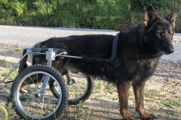 Cadeira de Rodas para Animais / Cão & Gato...