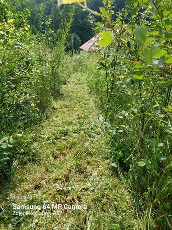 Koszenie trawników, czyszczenie działek, łąk, mulczowanie, wycinka.
