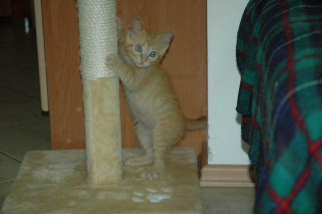 Котенок мальчик ,Рыжик в хорошие руки