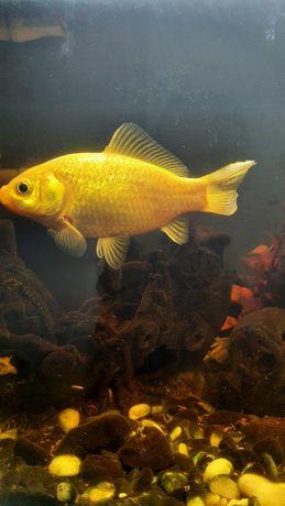 Vendo esses três peixes, porque vou trocar a fauna