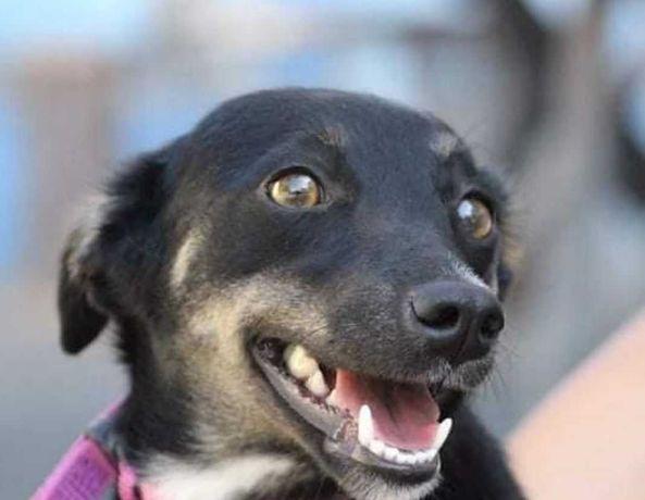 Чери, уютная маленькая собачка в квартиру, собака