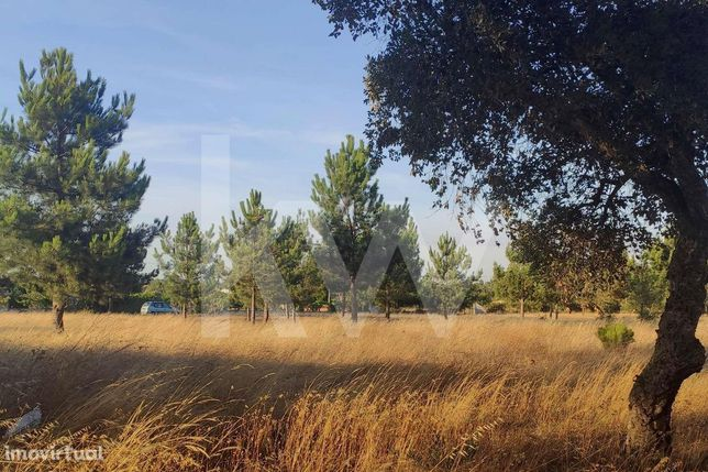 Terreno agrícola com 8.000m2, na Quinta do Anjo, a 5' do centro da Moi