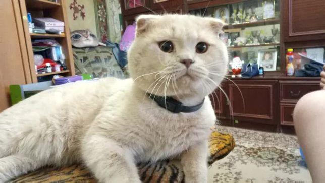 Безответственная хозяйка кота!