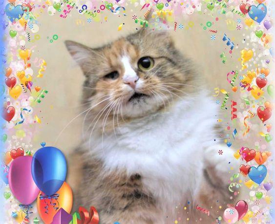 Маша-Маруся, уникальна стерильная кошка