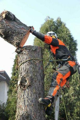 Wycinka drzew drwal