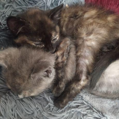 Кошенята дівчатка