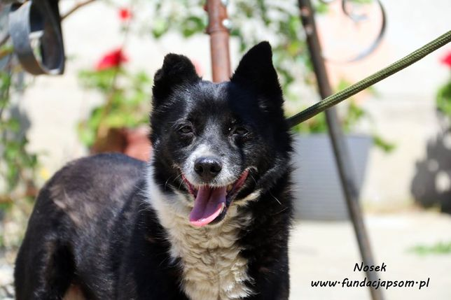 Nosek - spokojny pies