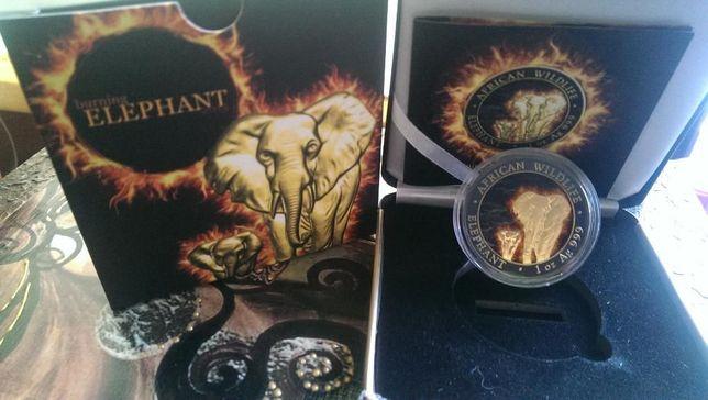 Płonący słoń African Wildlife