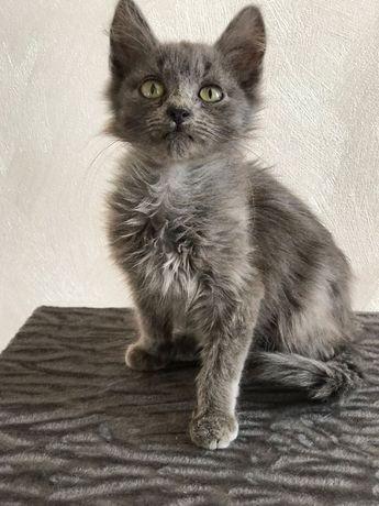 Котеня. Кіт