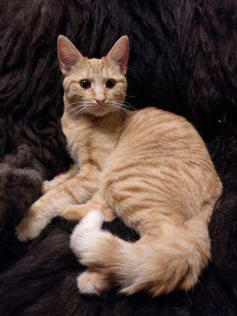 ZAGINĘŁA ruda kotka. Nagroda 500zł..